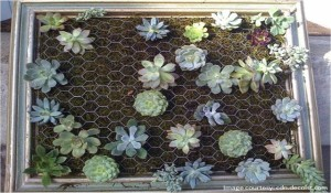 Putting plants into the frame